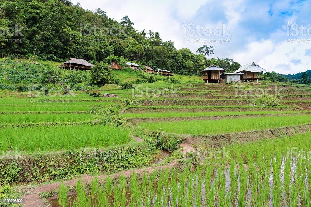 'Baan Pa Pong Piang' located in Mae Jam, Chiangmai, Thailand. Lizenzfreies stock-foto