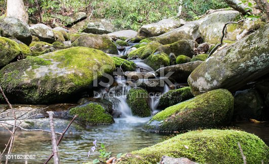 istock Babbling Brook in the Forest 1011629262