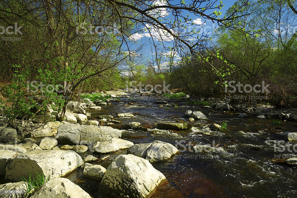 Babbling Brook in the Forest stock photo