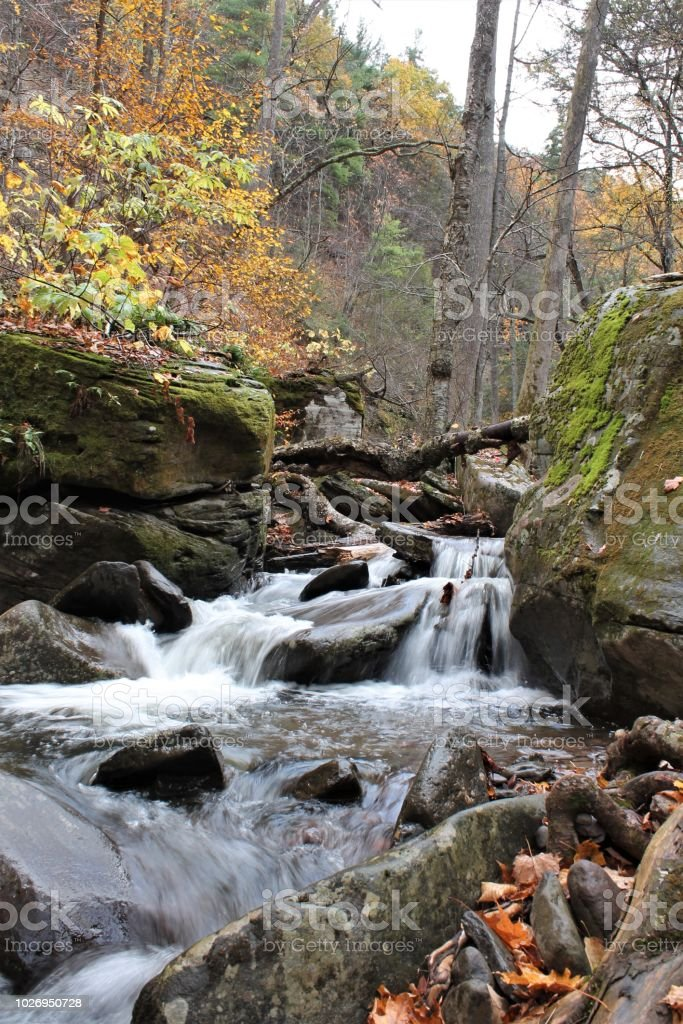 Babbling stream in autumn forest stock photo