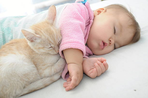 Baby and cat sleeping together picture id517923957?b=1&k=6&m=517923957&s=612x612&w=0&h=dvq9dqjcuw0jnn1 4rlzbepd5jxxa5xii0j8su5 sek=