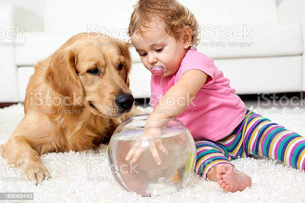 Baby and dog catch a goldfish picture id185069443?b=1&k=6&m=185069443&s=612x612&h=9lezrm4oztr8h ecduvuvpdegwddtdwvgecejpb0yjo=