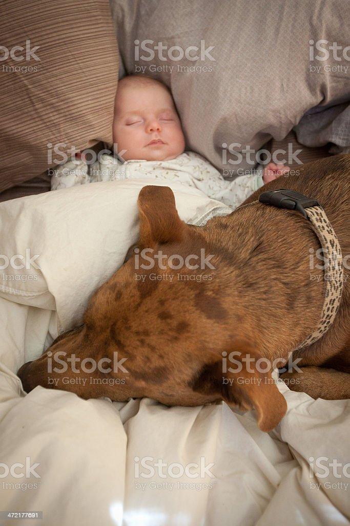 Baby and Dog stock photo