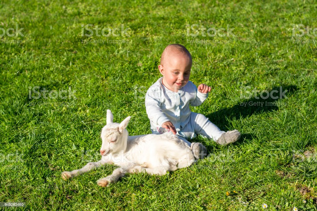 Baby and goatling on spring play together stock photo