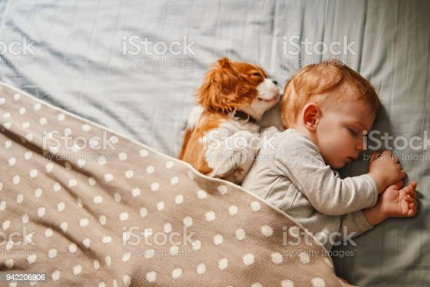 Baby and his puppy sleeping peacefully picture id942206906?b=1&k=6&m=942206906&s=612x612&h=xbjvaxkfzyi2urcmutnfhuv8h8hvl7v3btttqq1oblg=