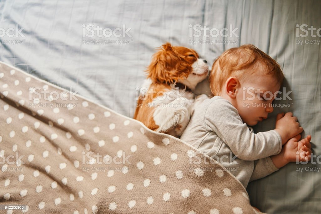 baby and his puppy sleeping peacefully stock photo