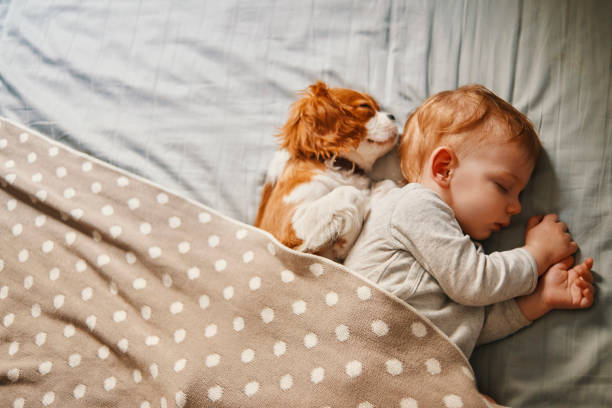 baby and his puppy sleeping peacefully - cute stock pictures, royalty-free photos & images