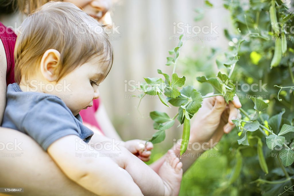 Baby and Mother in Garden stock photo