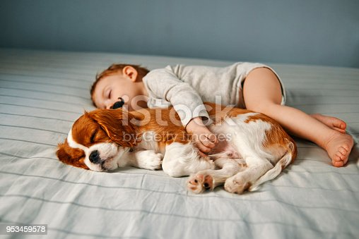 942206906 istock photo baby and puppy taking a power nap 953459578