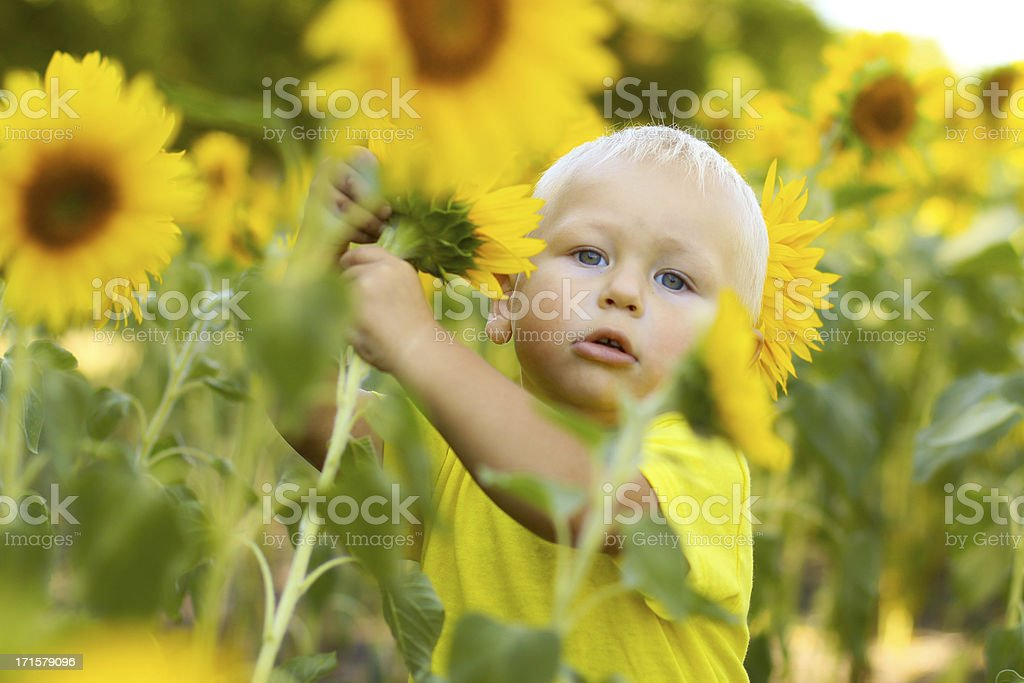 Baby and sunflower royalty-free stock photo