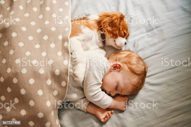 Baby and the puppy enjoying their nap together picture id947237486?b=1&k=6&m=947237486&s=612x612&h=vtuuf dosnq9kyaxpviuwjo11emykrypnzrzueoc48s=