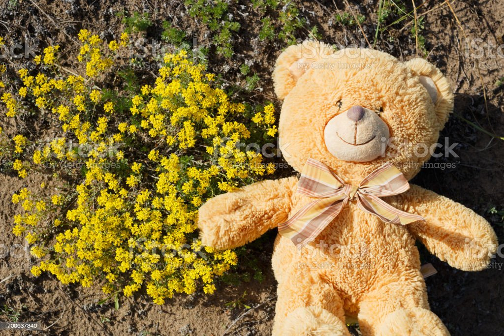 Baby bear and flowers stock photo