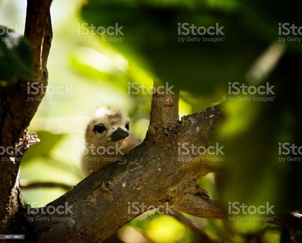 Baby Bird on a Branch