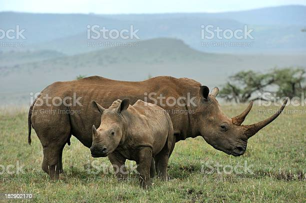 baby-black-rhino-and-mother-picture-id18