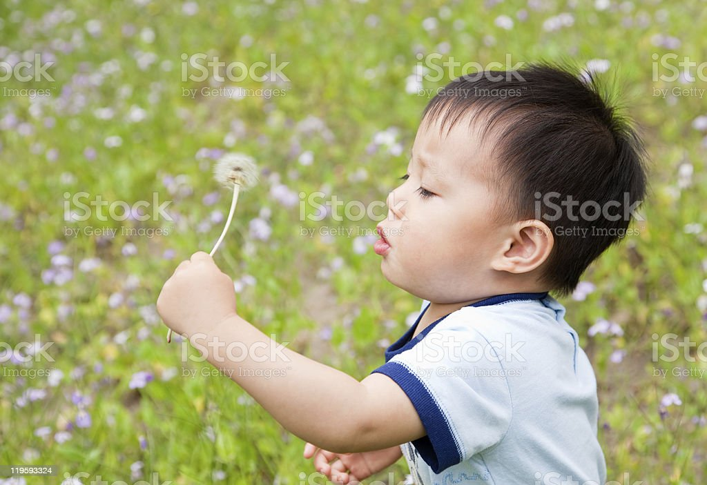 baby blowing a dandelion royalty-free stock photo
