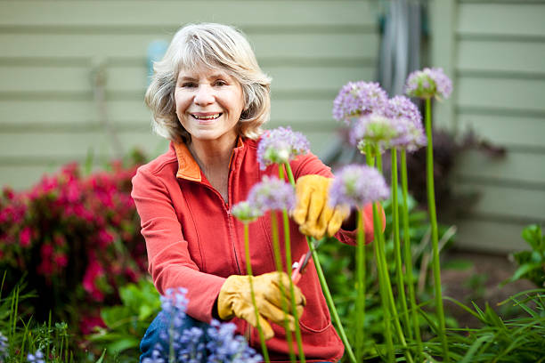 Baby Boomer woman gardening outside surrounded by flowers stock photo