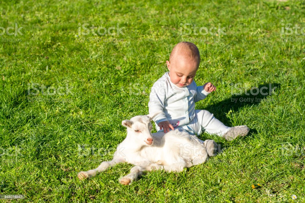 Baby boy and goatling on spring day play together stock photo