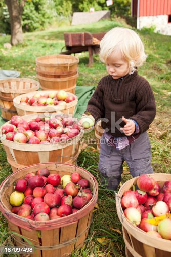 istock Baby boy picking up apples at the farm 187097498