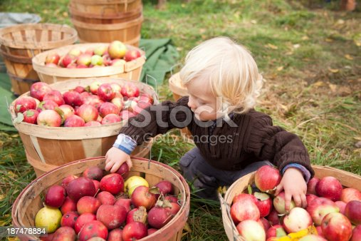 istock Baby boy picking up apples at the farm 187478884