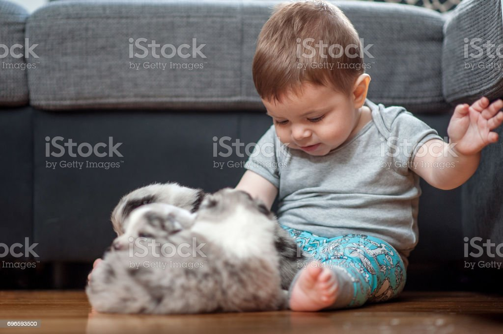 fb893ed1d88 Baby Boy Playing With Four Weeks Old Puppies Stock Photo   More ...