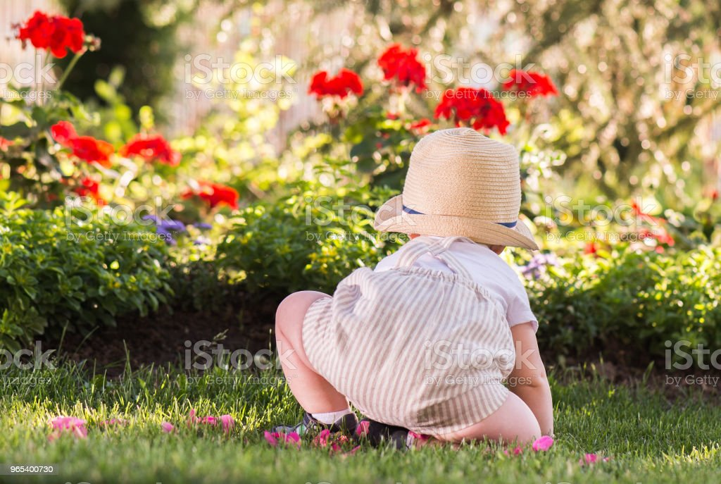 Baby boy sitting on the grass  watching flowers in the garden on beautiful spring day royalty-free stock photo