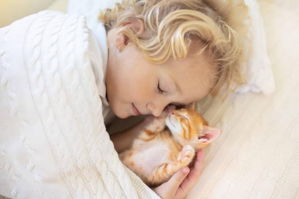 Baby boy sleeping with kitten child and cat picture id1167433183?b=1&k=6&m=1167433183&s=612x612&w=0&h=yxjcd21dokdchkubeefadonxg6ei4ncrdsebo2bwy5e=