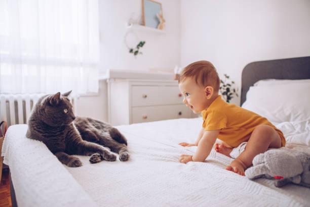 Bebé niño tratar de atrapar gato - foto de stock