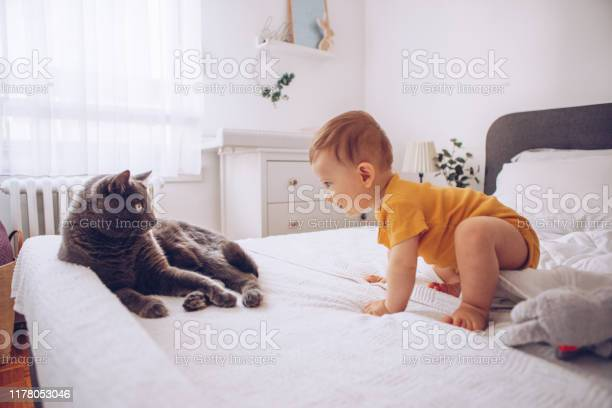 Baby boy try to catch cat picture id1178053046?b=1&k=6&m=1178053046&s=612x612&h=cwm6bjs8ju7n6toxm4na8p20kz9brtxl0ot3hzgbrhc=