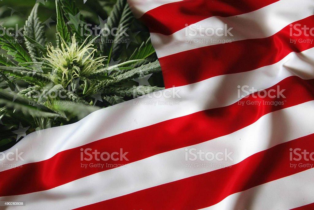 Baby Bud USA stock photo
