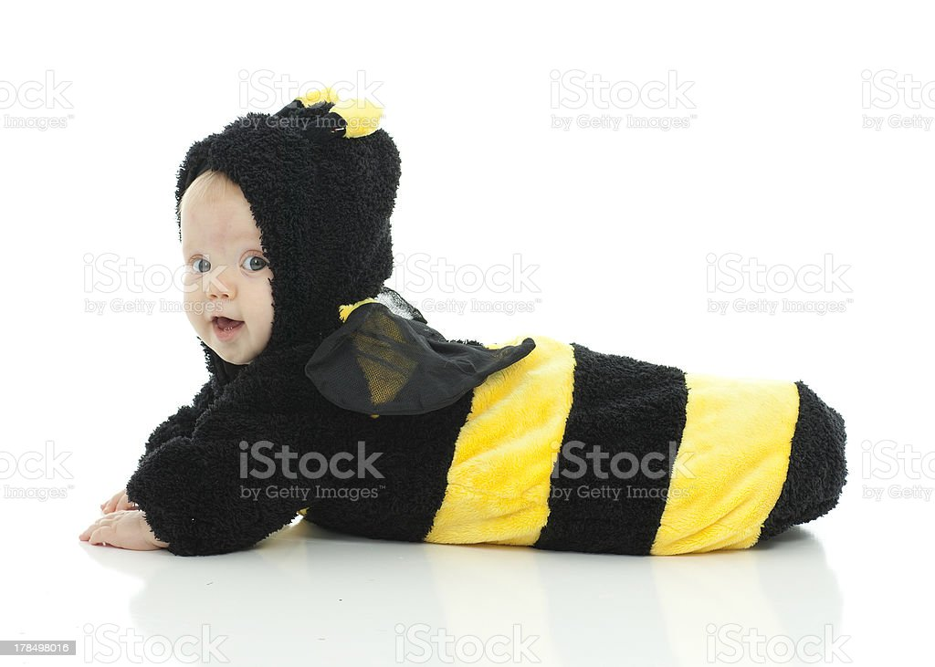 Baby Bumble Bee stock photo