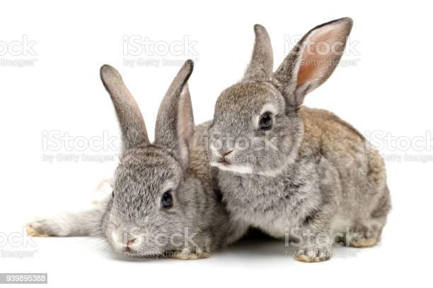 Baby bunny isolated on white background picture id939895388?b=1&k=6&m=939895388&s=612x612&h=gz2mssexqj7btn6dz6x6qvgikmrcefj4hrkvrofcpvq=