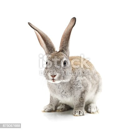 istock Baby Bunny on the white background 875067688