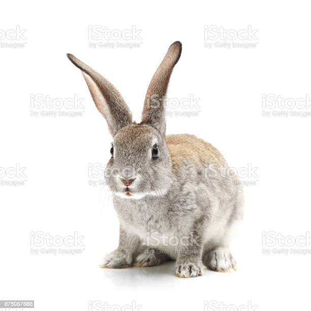 Baby bunny on the white background picture id875067688?b=1&k=6&m=875067688&s=612x612&h=wicj8 atpqodxweiaoywyzf6lbwclwsnbjoyg8g8t9q=