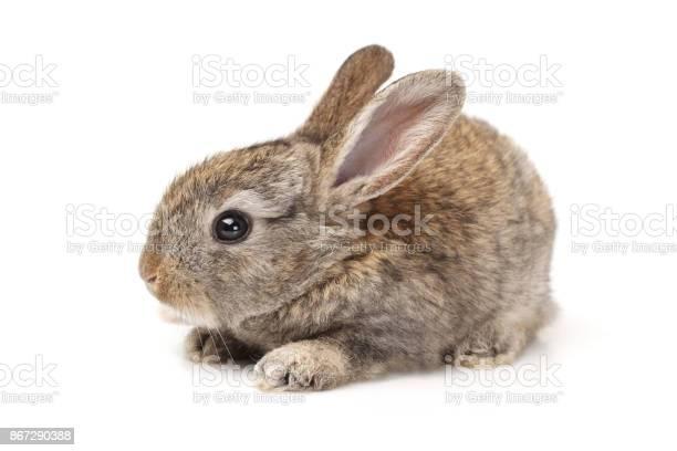 Baby bunny on white background picture id867290388?b=1&k=6&m=867290388&s=612x612&h=g6nbtlnmhlqom10pw kfaf0 29czpg  8cxrlub n 0=