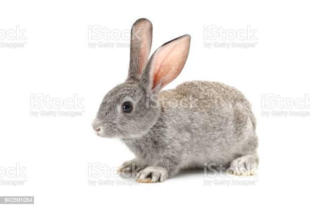 Baby bunny on white background picture id942591054?b=1&k=6&m=942591054&s=612x612&h=xe7um5kropwr80ybitkstv5bkzy7tff8rrli7rsvbke=