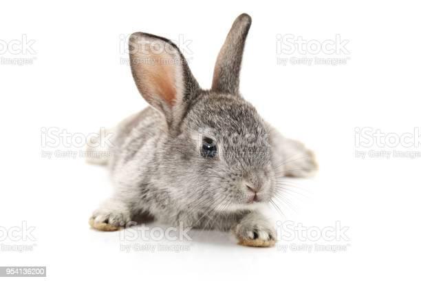 Baby bunny on white background picture id954136200?b=1&k=6&m=954136200&s=612x612&h=cyg6skn2aqfum8qlqupakk4qs gsgt0ifrv7x795xeo=