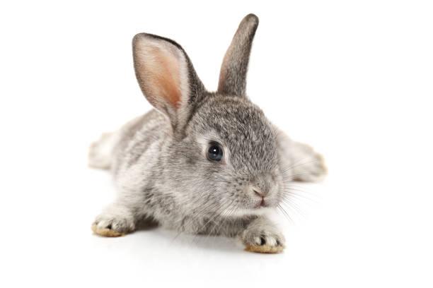 Bébé lapin sur fond blanc - Photo