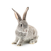 Baby Bunny isolated on white