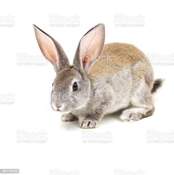 Baby bunny picture id904795430?b=1&k=6&m=904795430&s=612x612&h=20f32v ugqtmmat3izvc7qtulhrbiab6wfq02zlaeqe=