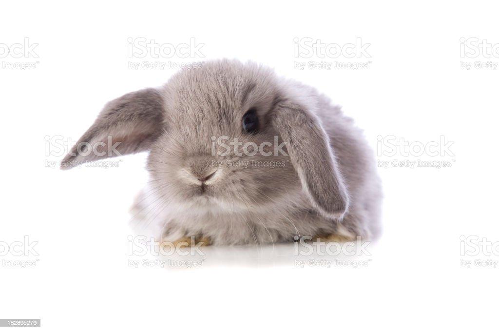 Baby Bunny Rabbit – Foto