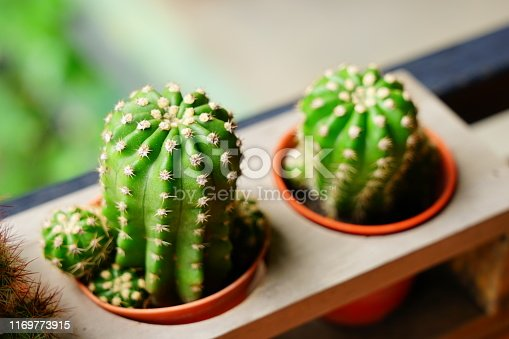 Thailand, Backgrounds, Cactus, Botany, Brown