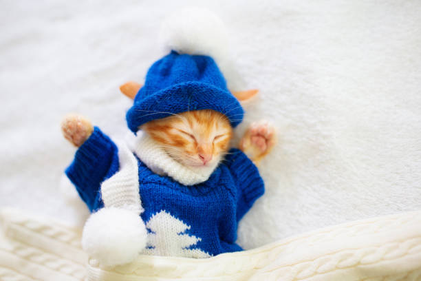 Baby cat in sweater and hat kitten sleeping picture id1192366408?b=1&k=6&m=1192366408&s=612x612&w=0&h=ztua 5e ifetgweoqknz9xjcmys16s8t22pjvtbwlss=