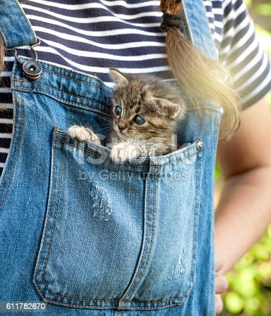 Baby cat inside blue bib overalls