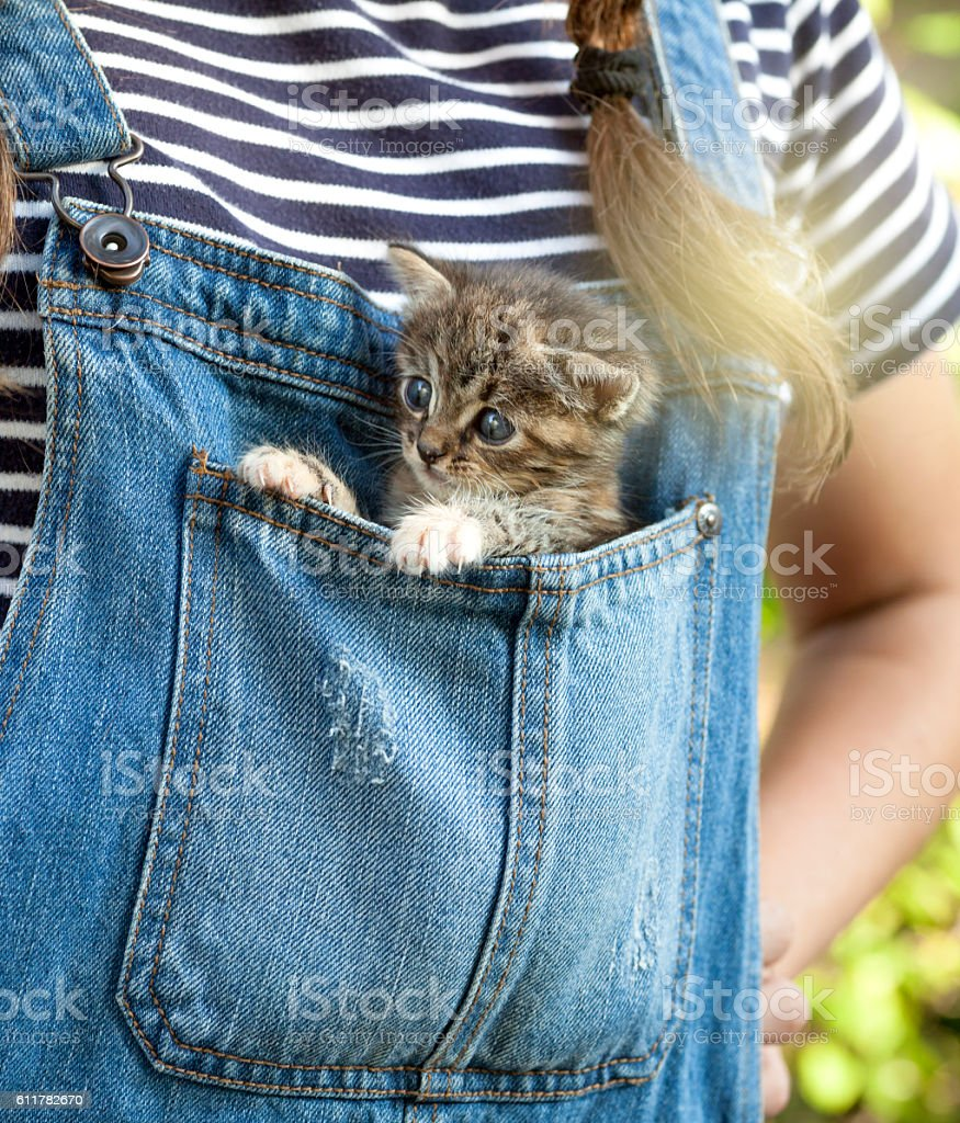 Baby cat inside blue jeans pocket stock photo