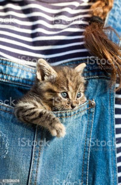 Baby cat inside blue jeans pocket picture id675036428?b=1&k=6&m=675036428&s=612x612&h= 03zfbwmhl5vwunp4fimj4lcgngd x4u18d61vgto q=