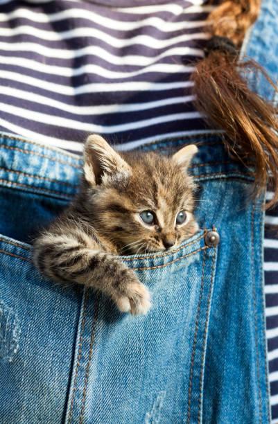 baby katze in blue jeans tasche - taschen von liebeskind stock-fotos und bilder