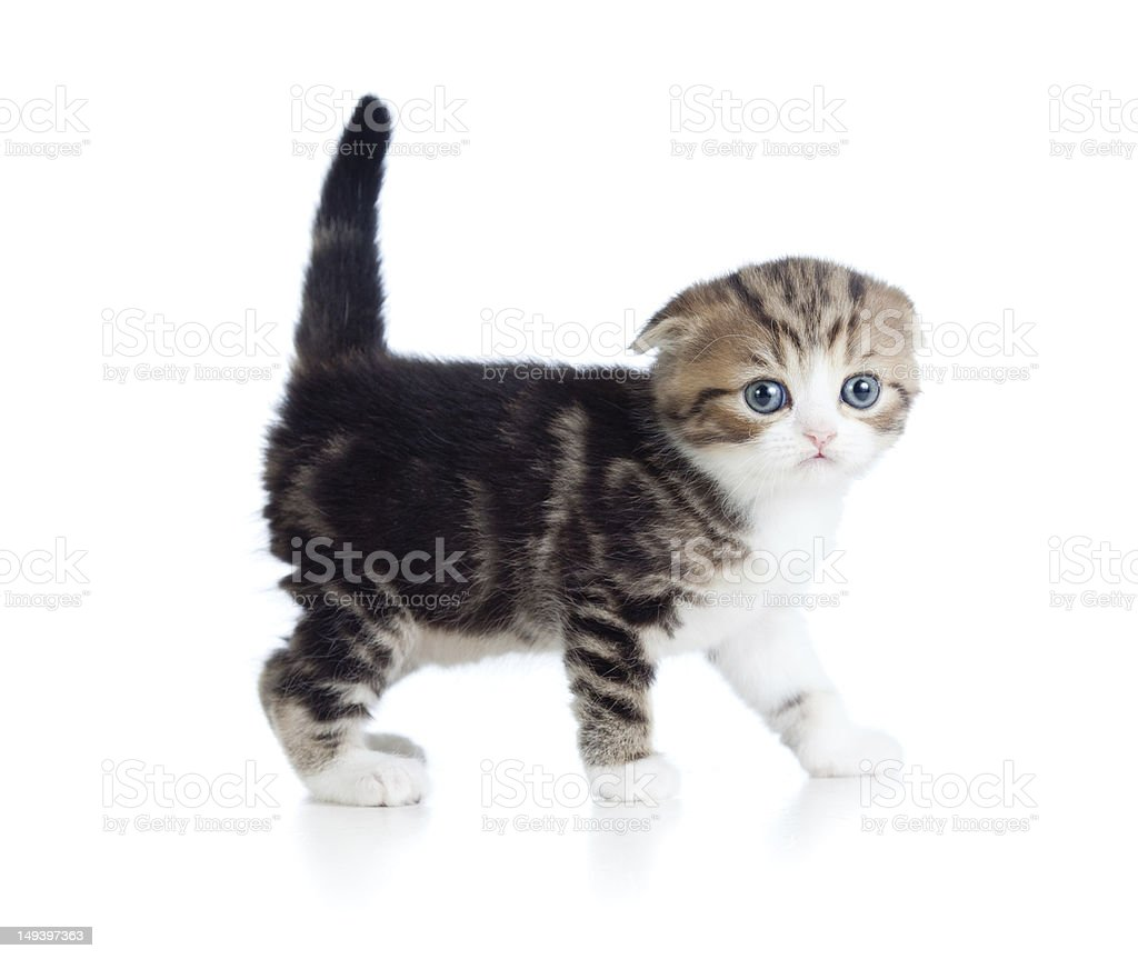 baby cat one month old stock photo