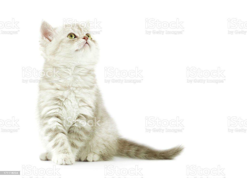 baby cat royalty-free stock photo