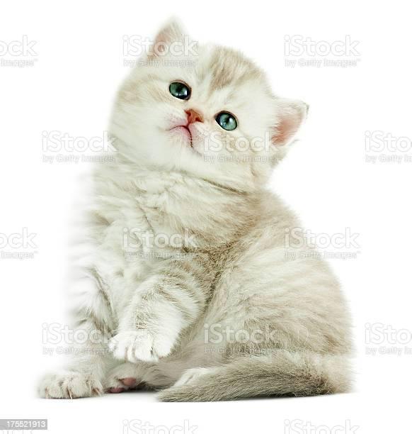 Baby cat picture id175521913?b=1&k=6&m=175521913&s=612x612&h=8dqrvyjpijwx4daepqoic jsg1jpsly0dherabjo6ru=