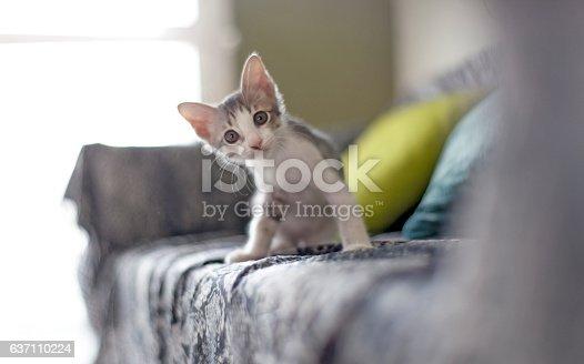 istock baby cat 637110224